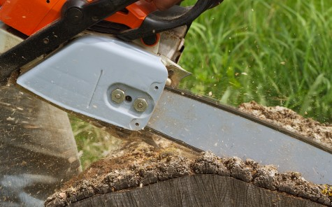 Tree removal company using a chainsaw to cut a tree