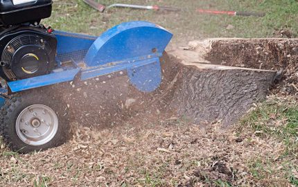 Stump grinder being used