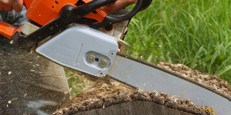 Tree being cut by a chainsaw