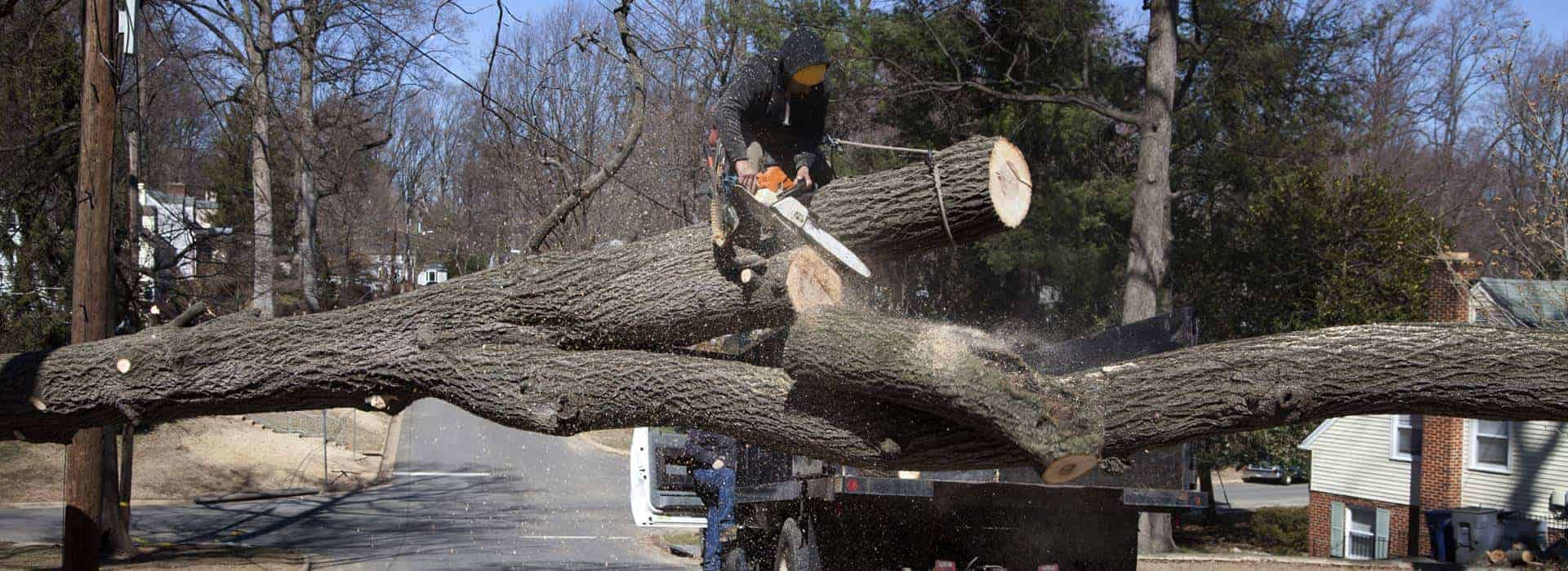 Man working on cutting uprooted tree blocking roads due to gusty wind