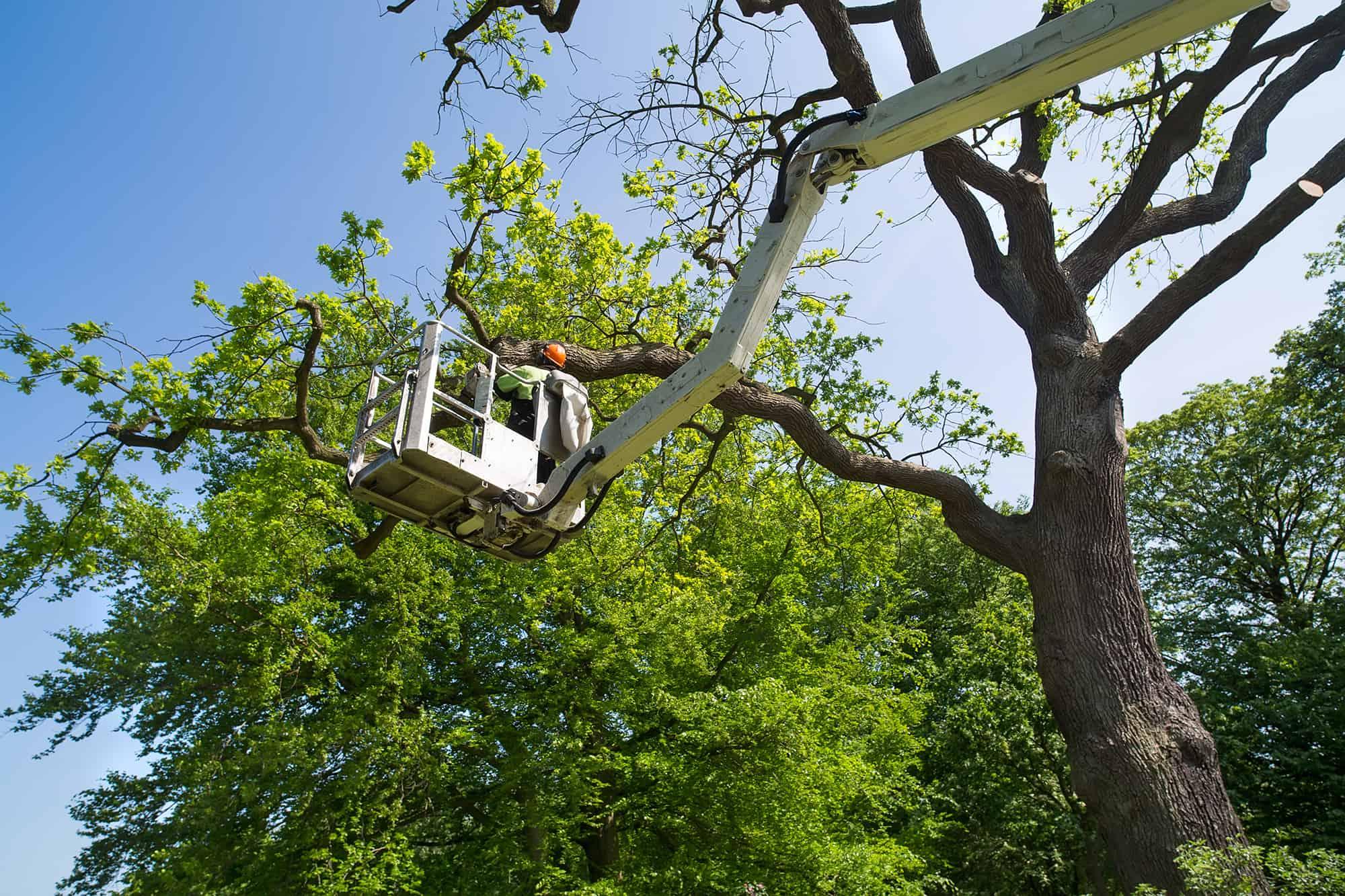 man cutting tree limbs