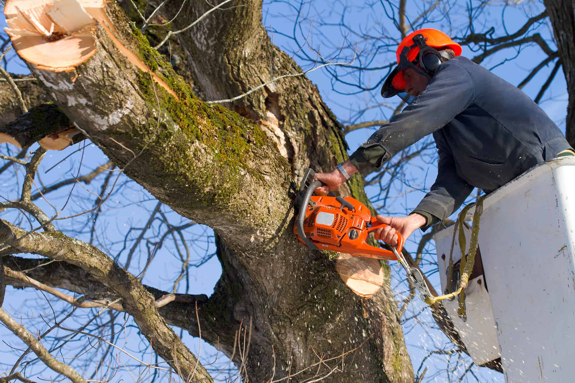 man cutting tree branches