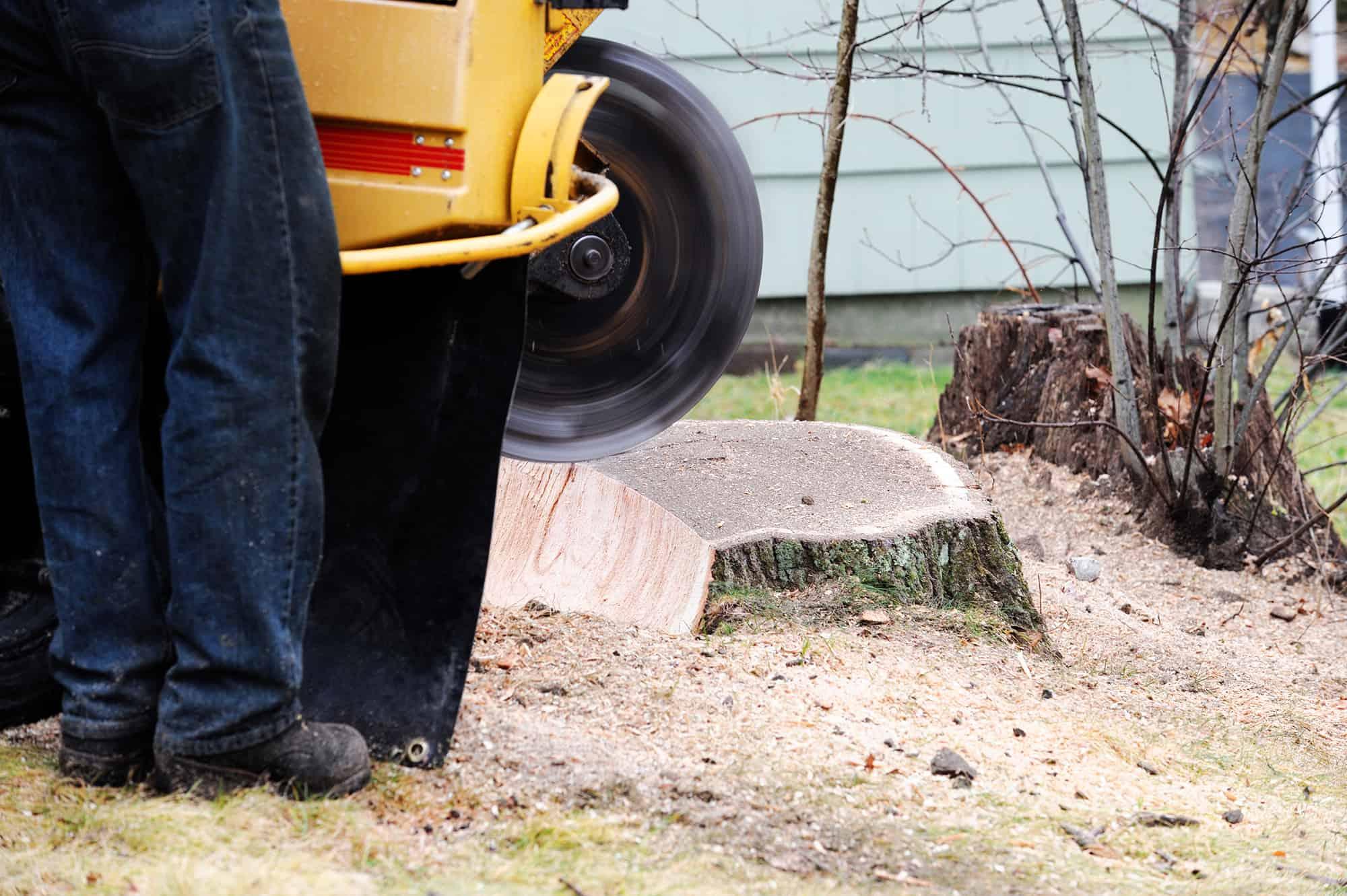 stump grinding tool