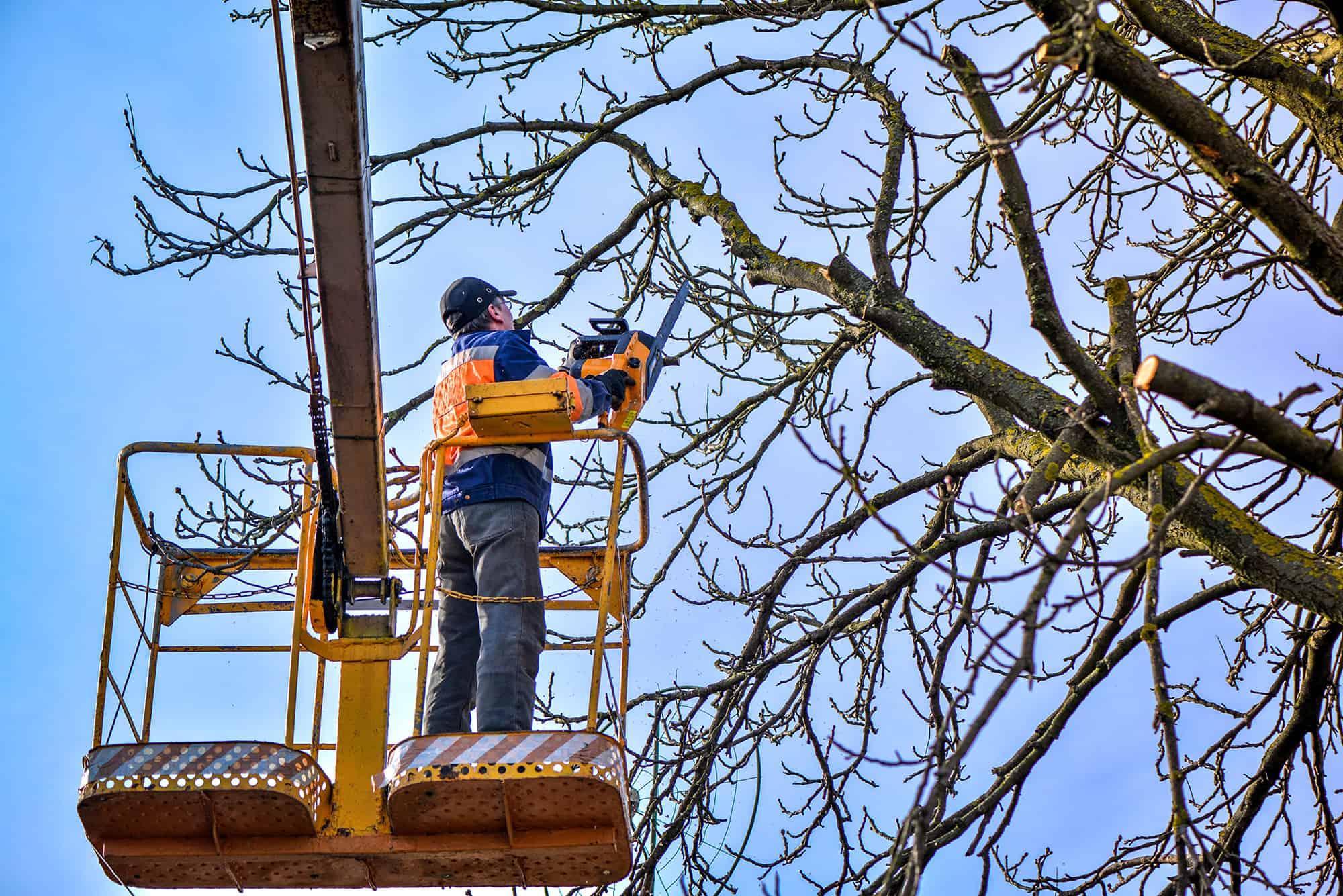 man cutting branches