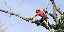 Image of a tree climber
