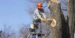 Image of a tree cutting